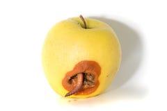 与一只大蠕虫的腐烂的苹果 免版税图库摄影