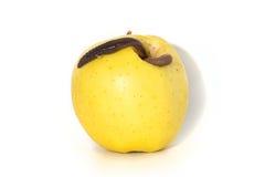 与一只大蠕虫的腐烂的苹果 库存图片