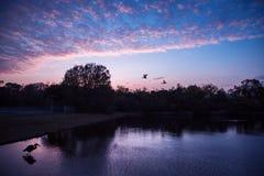 与一只大鸟的佛罗里达日落在水中 免版税库存图片