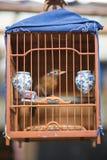 与一只小鸟的鸟笼在鸟市场上在上海 图库摄影