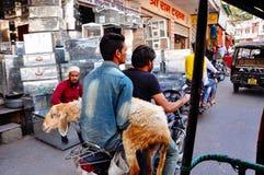 与一只山羊的一台本机在乌代浦,印度 图库摄影