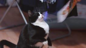 与一只快乐的猫的比赛 影视素材