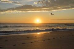 与一只海鸥的日出在佛罗里达 库存照片
