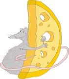 与一只灰色鼠的图象的例证,拥抱大片断乳酪 字符 向量 库存图片