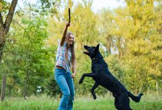 与一只牧羊犬的十几岁的女孩戏剧在室外的公园 库存照片
