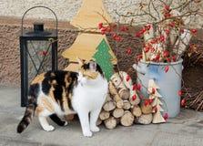 与一只猫的室外圣诞节装饰在前面 免版税库存照片