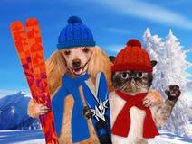 与一只猫的狗与滑雪 库存照片