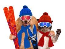 与一只猫的狗与滑雪 免版税库存照片