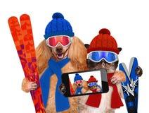 与一只猫的狗与滑雪 免版税库存图片