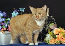 与一只白色乳房猫的美好的红色 免版税库存图片