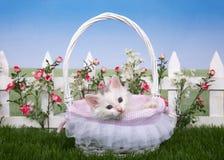 与一只白色小猫的春天篮子在花园里 免版税库存照片