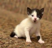 与一只白色小猫的滑稽的一点黑色 库存照片