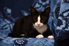 与一只白色小猫的黑色 免版税图库摄影