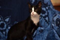 与一只白色小猫的黑色 库存图片