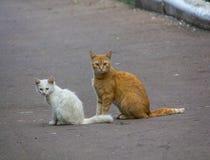 与一只白色小猫的离群红色猫 图库摄影