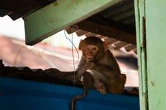 与一只眼睛的坐的猴子 免版税库存图片