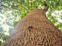 与一只蚂蚁的树对此 免版税库存图片