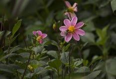 与一只蜂的花在庭院里 库存照片