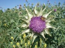 与一只蜂的蓟在草甸 免版税库存照片