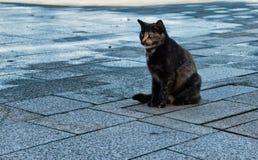 与一只被放弃的猫的情感都市场面 免版税库存图片