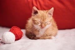 与一只逗人喜爱的姜猫的圣诞节图片在红色背景 免版税库存照片