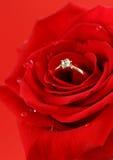 与一只金戒指的红色玫瑰与金刚石 免版税库存照片