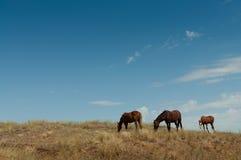 与一只驹的马在原野。 库存图片