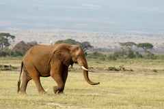 与一只鸟的大象对此 免版税库存图片