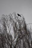 与一只鸟的晚秋天树在与重的云层的一天 库存图片