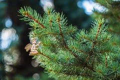 与一只鸟的金黄天使在绿色云杉 安置文本 元素圣诞节设计 免版税库存图片