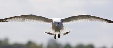 与一只鸥的美好的图片在天空 免版税库存图片