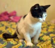 与一只黑小猫的白色 免版税库存图片