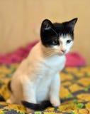 与一只黑小猫的白色 库存照片