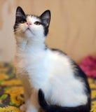 与一只黑小猫的白色 免版税库存照片