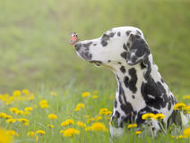与一只蝴蝶的逗人喜爱的狗在他的鼻子 库存图片