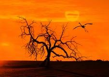 与一只flighting的鸟的日落 免版税图库摄影