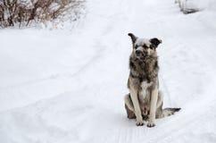 与一哀伤的看起来的一条无家可归的狗洒与雪 免版税库存照片