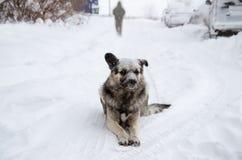 与一哀伤的看起来的一条无家可归的狗洒与雪 免版税库存图片