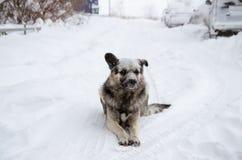 与一哀伤的看起来的一条无家可归的狗洒与雪 库存照片