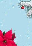 与一品红和冷杉分支的欢乐框架 库存图片