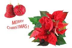 与一品红的圣诞卡 免版税库存照片