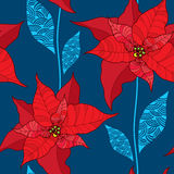 与一品红花或圣诞节星的无缝的样式在蓝色背景的红色 传统圣诞节标志 库存图片