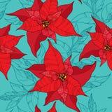 与一品红花或圣诞节星的无缝的样式在绿松石背景的红色 传统圣诞节标志 免版税库存图片