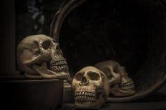 与一块人的头骨的头骨的摄影 库存照片