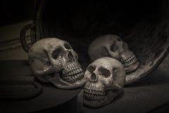 与一块人的头骨的头骨的摄影 免版税库存照片