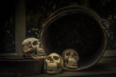 与一块人的头骨的头骨的摄影 免版税库存图片