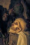 与一块人的头骨有沙漠植物的,仙人掌,玫瑰的静物画 免版税库存图片