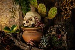 与一块人的头骨的静物画有沙漠植物的 库存图片