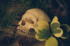 与一块人的头骨的静物画有沙漠植物的 免版税库存图片