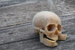 与一块人的头骨的静物画 库存图片